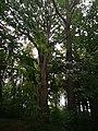 Památné stromoví Bransoudov 05.jpg