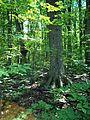 Parc-nature du Bois-de-l-ile-Bizard 26.jpg