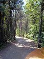 Parc-nature du Bois-de-l-ile-Bizard 54.jpg