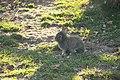 """Parcul de Animale - """"Moara de Vant"""" (8110136891).jpg"""