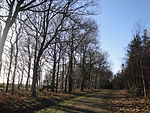 Parkhurst Forest near Noke Common in February 2011.JPG