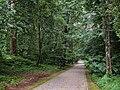 Parque Fundação Serralves woods (5736246652).jpg