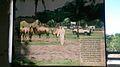Parque Temático Hacienda Nápoles 76.jpg
