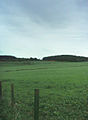 Pasture - geograph.org.uk - 443769.jpg