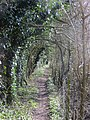 Path between railway and golf course - March 2013 - panoramio.jpg