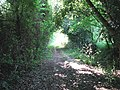 Path to Framingham Earl Lane - geograph.org.uk - 1373090.jpg
