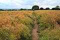 Path to Risley Lodge Farm - geograph.org.uk - 878703.jpg