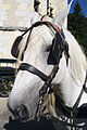 Percherons Blancs Cl J Weber0003 (24083440725).jpg