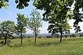 Perchtoldsdorfer Heide, Bild 1.jpg