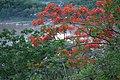 Phou si - Mekong River - Luang Prabang Laos プーシーの丘、メコン川 ラオス・ルアンプラバーン DSCF6767.jpg