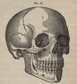 Physiology for Young People - 1884 - The skull.png