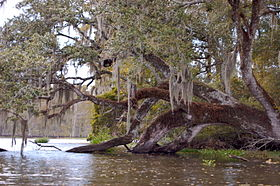 Pic from the canoe on Bayou Corne.jpg