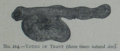 Picture Natural History - No 214 - Young of Trout.png