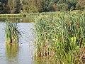 Piltdown Pond - geograph.org.uk - 985300.jpg