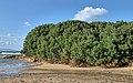 Pistacia lentiscus 001.jpg