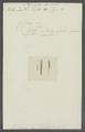 Planaria dorsalis - - Print - Iconographia Zoologica - Special Collections University of Amsterdam - UBAINV0274 105 09 0029.tif