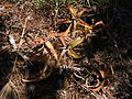 Plant 1 Sos Alinos Cala Liberotto 16072014 40.4333443, 9.7743612.jpg