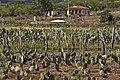Plantação no semiárido (16077580847).jpg