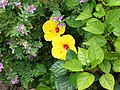 Plants - panoramio (1).jpg