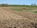 Ploughed fields - geograph.org.uk - 160819.jpg