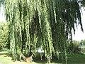 Podkostelní rybník (021).jpg