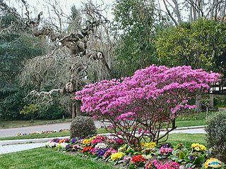 Arboretum of Lourizán Botanical garden in Pontevedra (Spain)