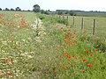 Poppies by the footpath approaching Faversham Creek - geograph.org.uk - 1353914.jpg