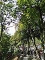 Postojnska Jama (Postojna Cave) - panoramio (54).jpg