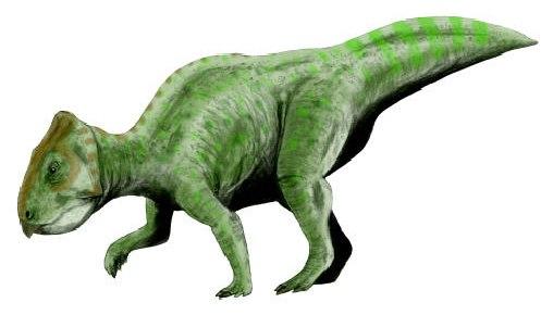 Prenoceratops BW