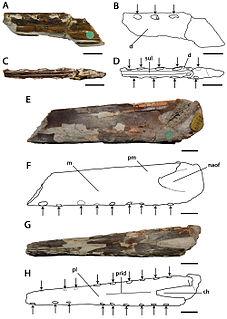 <i>Lonchodectes</i> genus of reptiles (fossil)