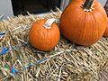 Pumpkins 1 2016-10-28.jpg