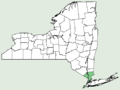 Pycnanthemum clinopodioides NY-dist-map.png