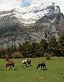 Pyrenees horses.jpg