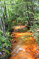Quaker Run looking downstream.JPG