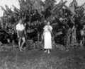 Queensland State Archives 2057 Banana Land Tweed Heads c 1934.png