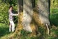 Quercus petraea JPG2b.jpg