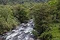 Río de Mindo y bosque.jpg