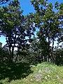 Radunia - panoramio (1).jpg
