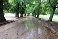 Rain at Wollaton Park (22099681611).jpg