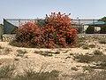 Ramot (BeerSheba) 48AC8CA8-4C48-465B-9401-E4AAE793D45F.jpg
