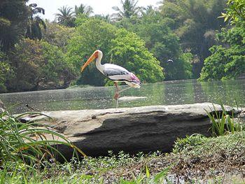 Ranganthittu-Birds Sanctuary-Karnataka-India-2.jpg