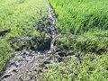 Reisfeldentwässerung.JPG