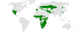 Remizidae distribution map.png