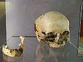 Restes d'Homo Sapiens del Paleolític Superior, procedents de la cova del Parpalló, Museu de Prehistòria de València.JPG