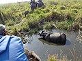 Rhinoceros in pond.jpg