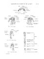 Richer - Anatomie artistique, 2 p. 28.png