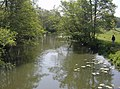 River Frome - geograph.org.uk - 439346.jpg