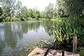 River Stour at Bures - geograph.org.uk - 860053.jpg