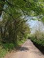 Road past Clarke's Plantation - geograph.org.uk - 2404619.jpg