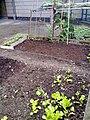 Robin Hood Gardens (4748952800).jpg